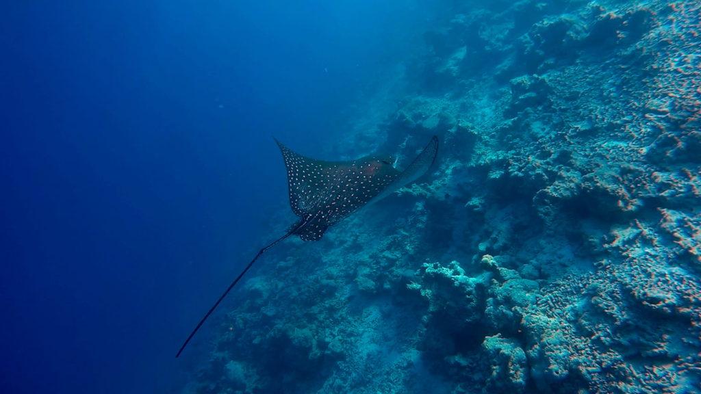gopro-maldives-v1-1