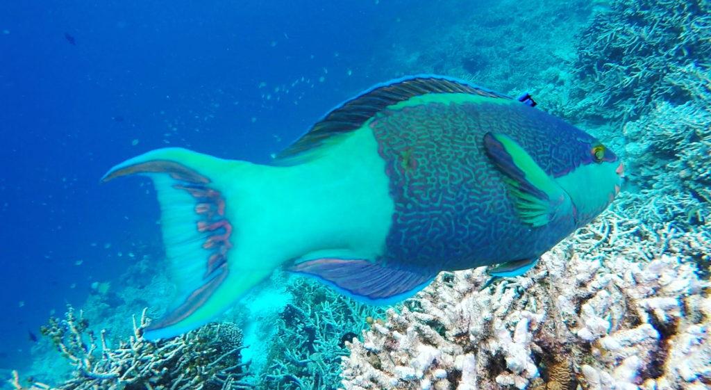 gopro-maldives-v10-1