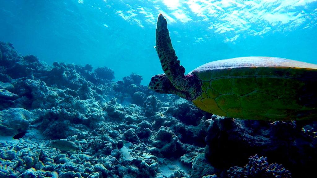gopro-maldives-v14-1