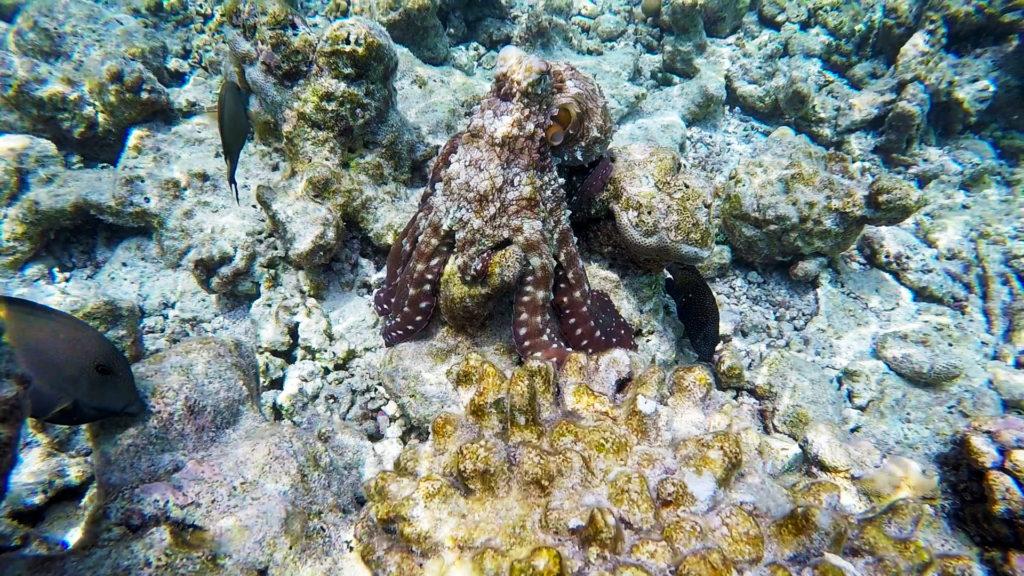 gopro-maldives-v2-1