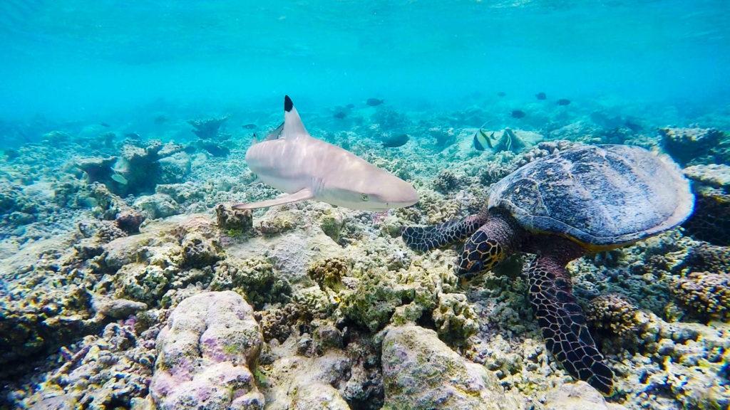 gopro-maldives-v8-1